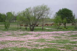 Spring Time in TX.
